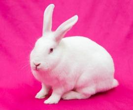 rabbit_on_pink.jpg