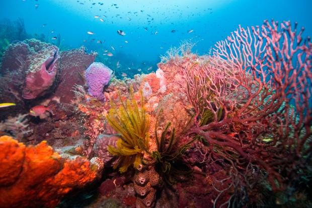 reefs_coral.jpg