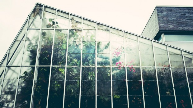 greenhouse-1246536_960_720.jpg
