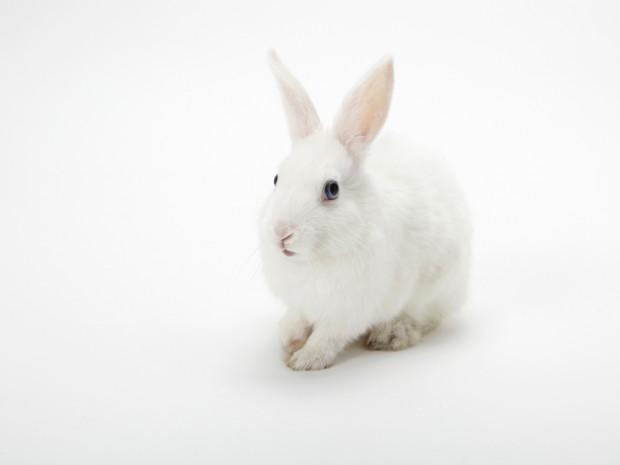 rabbit_100.jpg