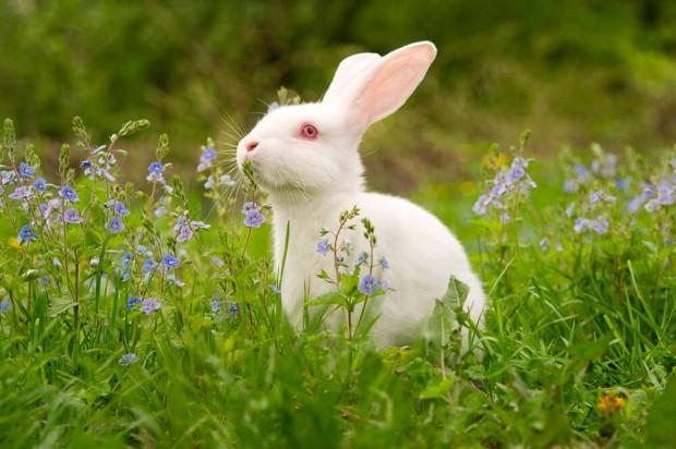 rabbit_bunny.jpg