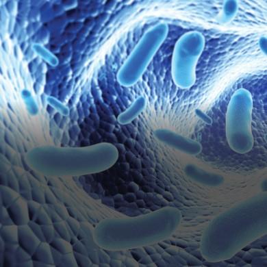 probiotics_fonterra.jpg